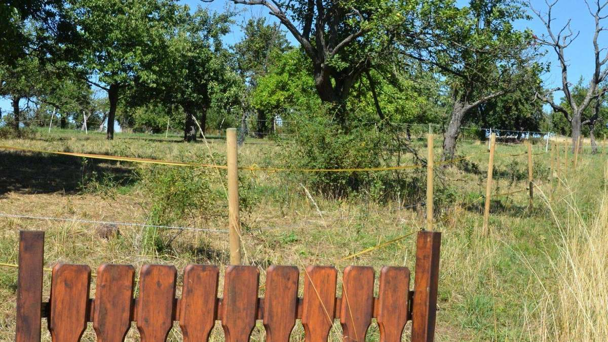 Streuobstwiesen gesucht | Bad Nauheim